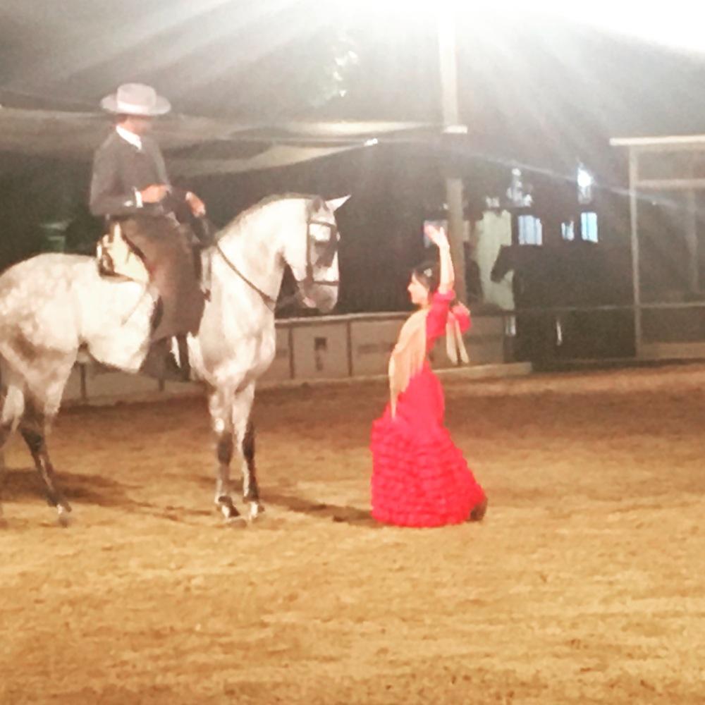 Cordoba - Equestrian Show